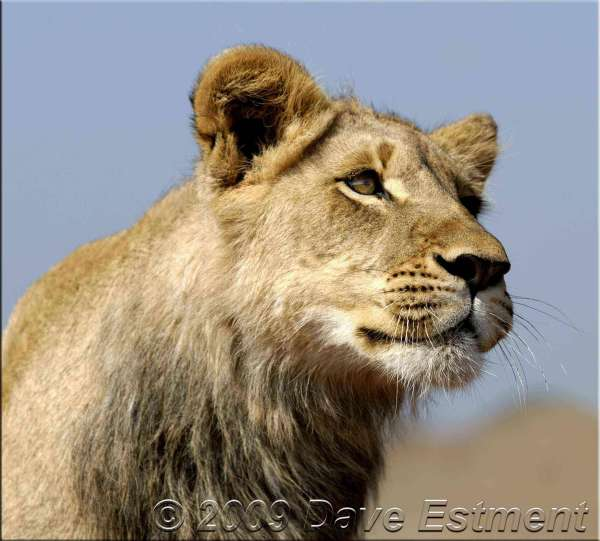 LIONESS - Rhino & Lion Nature Reserve, South Africa